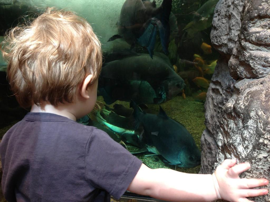 Biodome Piranhas