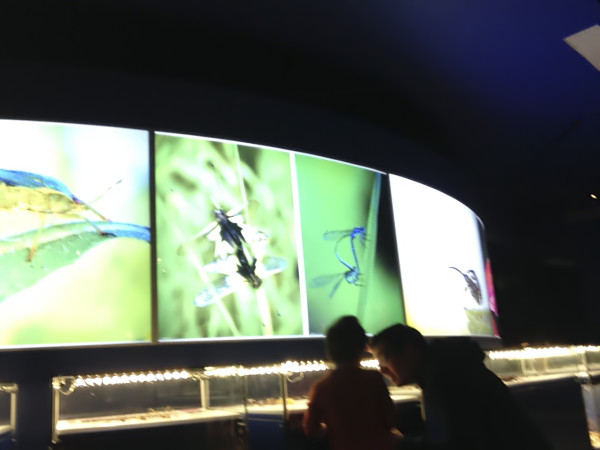Insectarium | RoastedMontreal.com