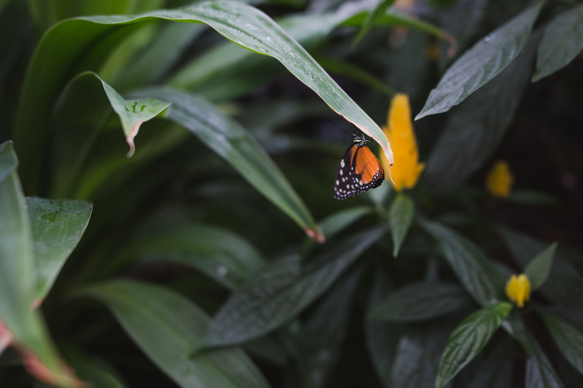 Butterflies Go Free at the Montreal Botanical Gardens